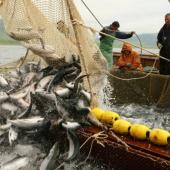 Чому і як Україна досі ділить рибу з Росією