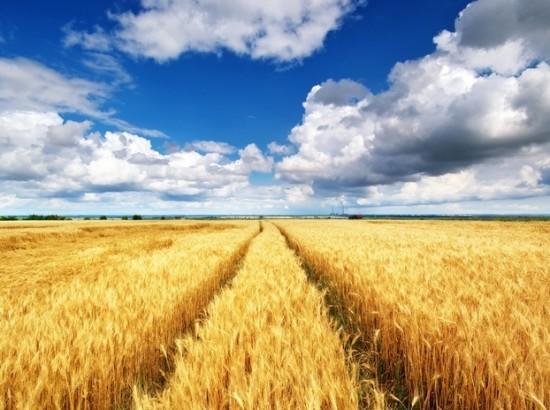 Україна - аграрна чи індустріальна держава?